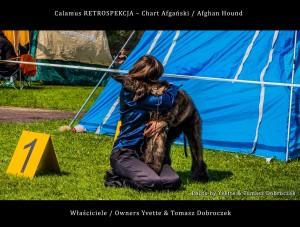Chart Afgański Afghan Hound - Calamus RETROSPEKCJA na Międzynarodowej Wystawie w Łodzi