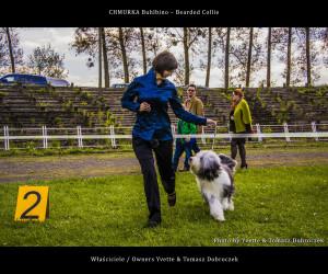 Chmurka Buhlbino - Bearded Collie - Międzynarodowa Wystawa Łódź 2015