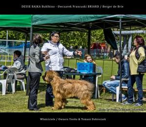 DESSE BAJKA Buhlbino - owczarek francuski BRIARD na XX Krajowej Wystawie Psów Rasowych / CAC – Ustka 17.05.2015r