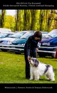 Polski Owczarek Nizinny Polish Lowland Sheepdog (PON) - IDA IDYLLA Via Rivendall na Międzynarodowej Wystawie w Łodzi (10)