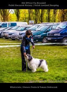 Polski Owczarek Nizinny Polish Lowland Sheepdog (PON) - IDA IDYLLA Via Rivendall na Międzynarodowej Wystawie w Łodzi (11)
