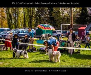 Polski Owczarek Nizinny Polish Lowland Sheepdog (PON) - IDA IDYLLA Via Rivendall na Międzynarodowej Wystawie w Łodzi (12)