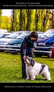 Polski Owczarek Nizinny Polish Lowland Sheepdog (PON) - IDA IDYLLA Via Rivendall na Międzynarodowej Wystawie w Łodzi (13)
