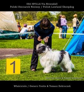 Polski Owczarek Nizinny Polish Lowland Sheepdog (PON) - IDA IDYLLA Via Rivendall na Międzynarodowej Wystawie w Łodzi (2)