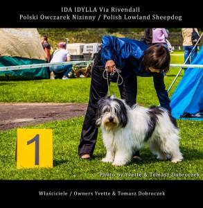 Polski Owczarek Nizinny Polish Lowland Sheepdog (PON) - IDA IDYLLA Via Rivendall na Międzynarodowej Wystawie w Łodzi (3)