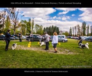 Polski Owczarek Nizinny Polish Lowland Sheepdog (PON) - IDA IDYLLA Via Rivendall na Międzynarodowej Wystawie w Łodzi (4)
