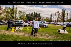 Polski Owczarek Nizinny Polish Lowland Sheepdog (PON) - IDA IDYLLA Via Rivendall na Międzynarodowej Wystawie w Łodzi (5)