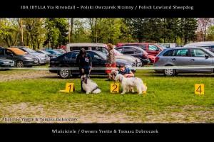 Polski Owczarek Nizinny Polish Lowland Sheepdog (PON) - IDA IDYLLA Via Rivendall na Międzynarodowej Wystawie w Łodzi (6)