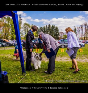 Polski Owczarek Nizinny Polish Lowland Sheepdog (PON) - IDA IDYLLA Via Rivendall na Międzynarodowej Wystawie w Łodzi (7)