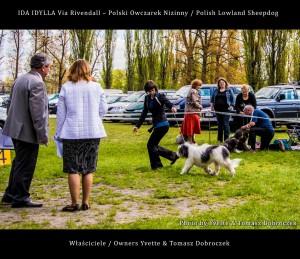 Polski Owczarek Nizinny Polish Lowland Sheepdog (PON) - IDA IDYLLA Via Rivendall na Międzynarodowej Wystawie w Łodzi (9)