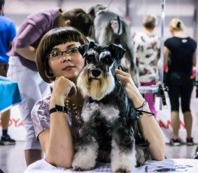 Zoe – Sznaucer Miniaturowy / Miniature Schnauzer - Szczenięta, hodowla psów Yvette Dobroczek