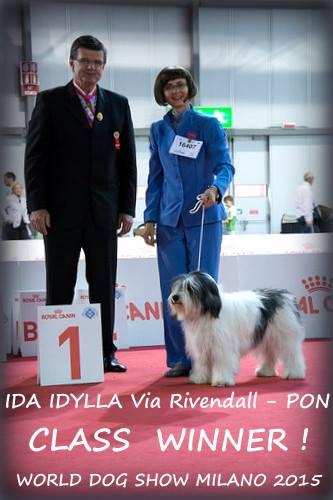 Polski Owczarek Nizinny IDA IDYLLA Via Rivendall - Zwycięzca Klasy Światowej Wystawy Psów Rasowych Milano 2015 - Szczenięta Yvette Dobroczek
