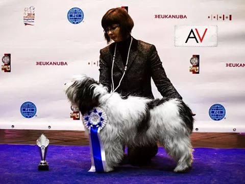 Polski Owczarek Nizinny IDA IDYLLA Via Rivendall Młodzieżowy Zwycięzca Europy Brno 2014 - Szczenięta Yvette Dobroczek