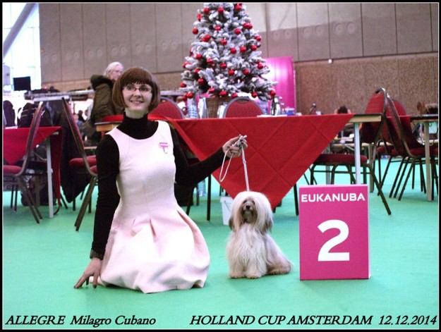 Biszon Hawański ALEGRE Milagro Cubano - srebrny medal Holland Cup 2014 - Amsterdam - Szczenięta Yvette Dobroczek