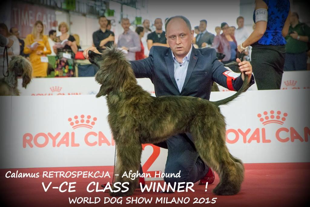 Chart Afgański Calamus RETROSPEKCJA : V-ce Zwycięzcą Klasy Szczeniąt na Światowej Wystawie Psów w Mediolanie 2015 - Szczenięta Yvette Dobroczek