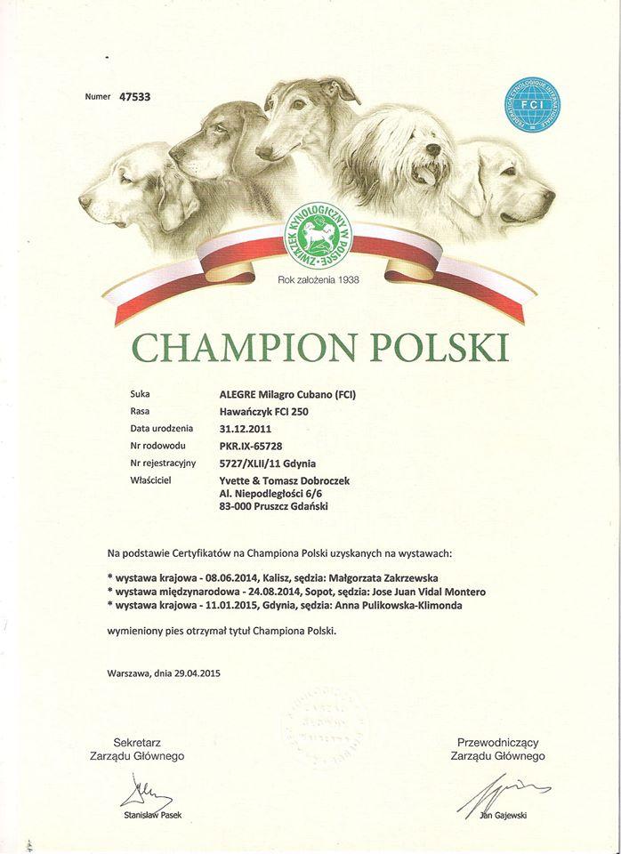 """Nasz Hawańczyk dziś otrzymał dyplom """"Champion Polski"""" Polskiego Związku Kynologicznego - Szczenięta Yvette Dobroczek"""