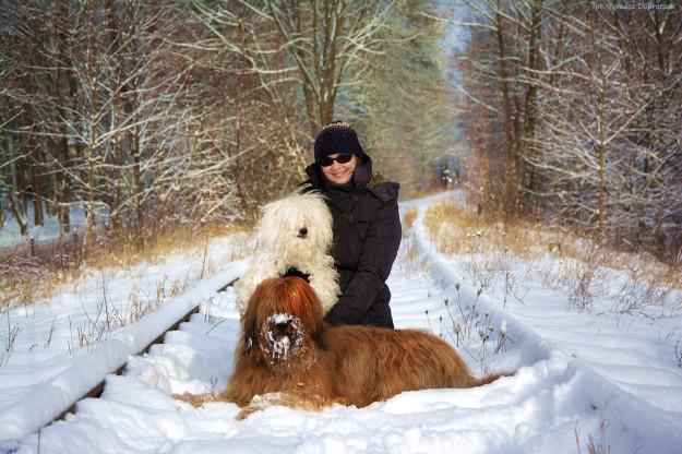 Desse / Briard zimą - Szczenięta Yvette Dobroczek