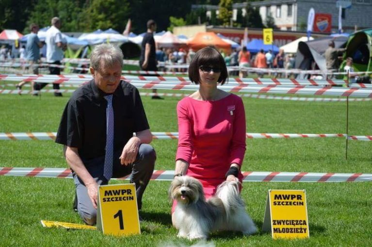 �ANGELHEART LAVINIA Pilosus �New JUNIOR CHAMPION OF POLAND! Today on the National Dog Show Szczecin our cute Havanese: �Best Junior on Breed �Youth Winner � first place, Excellent Thank you for Judge : Andrzej Kaźmierski (PL) Today �She finished Junior Champion of Poland � Grooming & handling owner Yvette Anne Dobroczek Thank you very much for photos Magdalena Dach & Tomasz Dobroczek.
