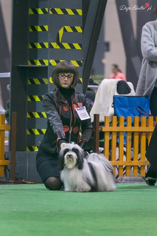 Bona miedzynarodowa wystawa psów rasowych cacib katowice