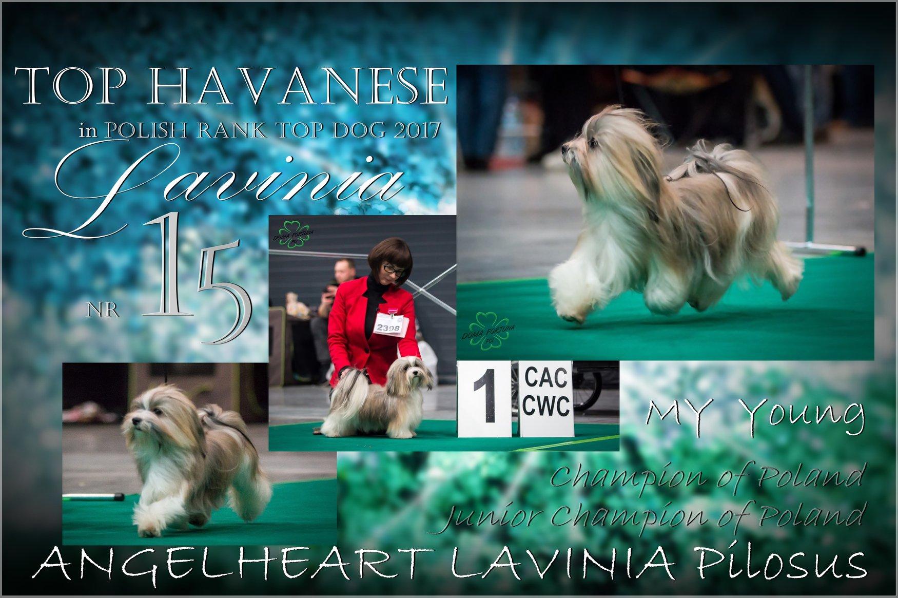 ANGELHEART Lavinia Pilosus Hawańczyk