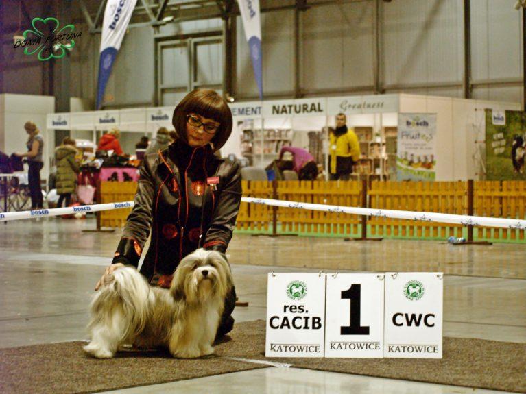 International Dog Show - Katowice 10.02.2018 CHPL,JCHPL ANGELHEART LAVINIA Pilosus