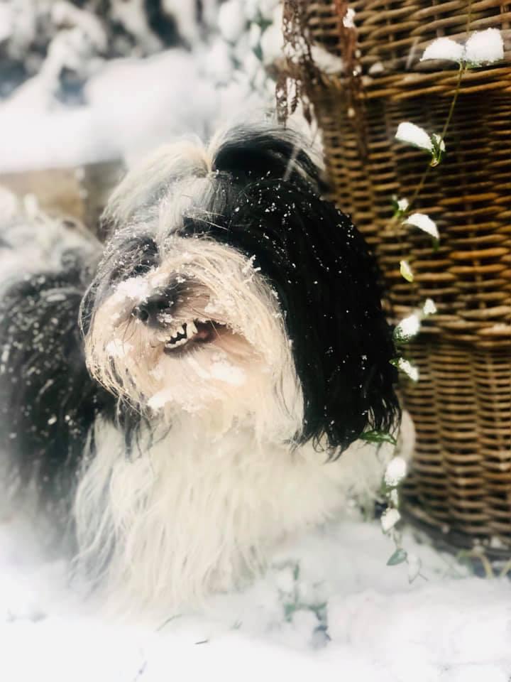 Bona ❤️Kung Fu Panda ❤️ Nie widzę 🙈Nie słyszę Cię 🙉do domu o nie..... 😂pędzę dalej 🐾🐾 Po prostu śniegowy szał 😂