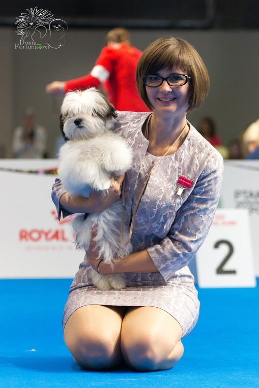2nd very promising Havanese puppy on the EDS Warsaw Poland
