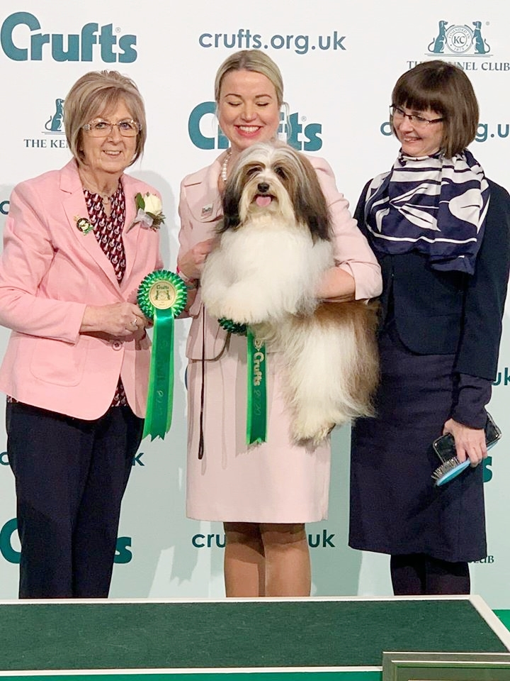 Ritmo havanese at Crufts