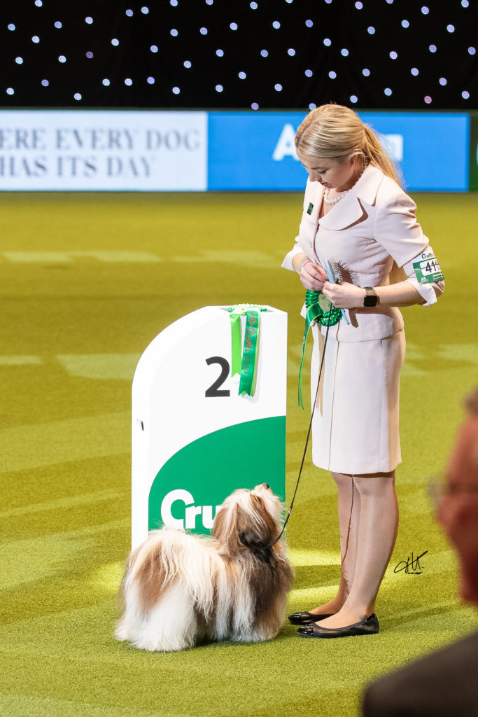 Ritmo hawąńczyk Best of Breed, Best of Toy Group Crufts 2020